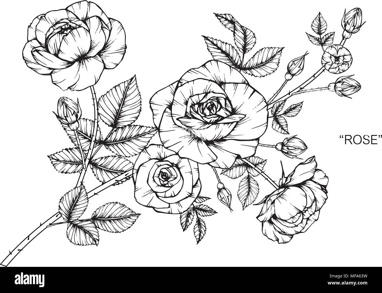 Ilustración Dibujo De Flores Rosas Blanco Y Negro Con Líneas Sobre