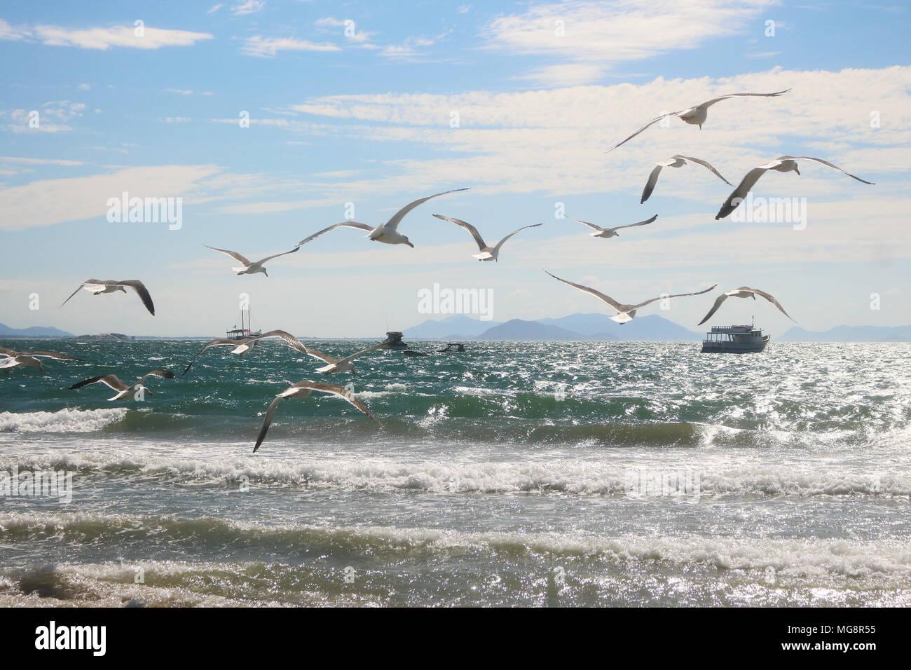 Una bandada de gaviotas en la playa. Un vuelo sobre el mar y sobre los barcos. La certeza de no tener destino y una luz de vida. La armonía, la belleza . Imagen De Stock