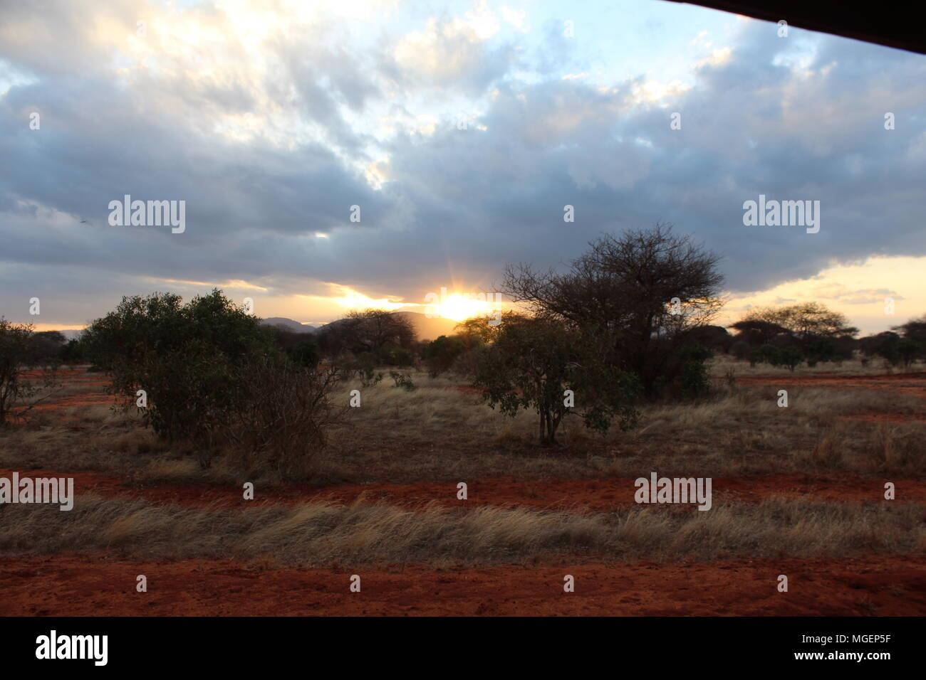 Atardecer en el parque natural de Tsavo en Kenia en África Foto de stock