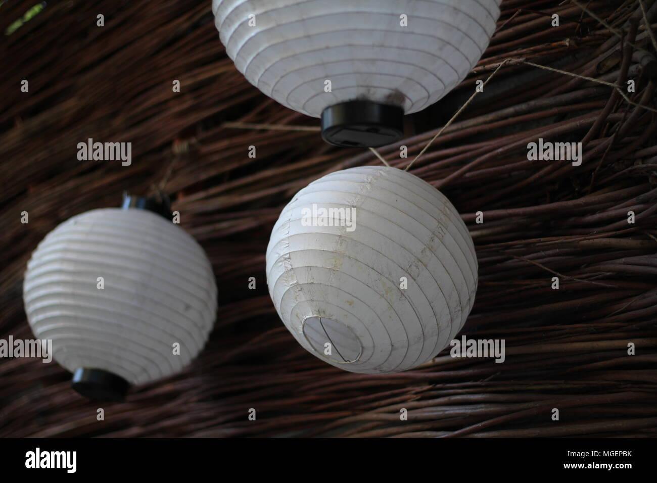 Linternas chinas blanco vacío colgado de una pared de madera espinos Foto de stock