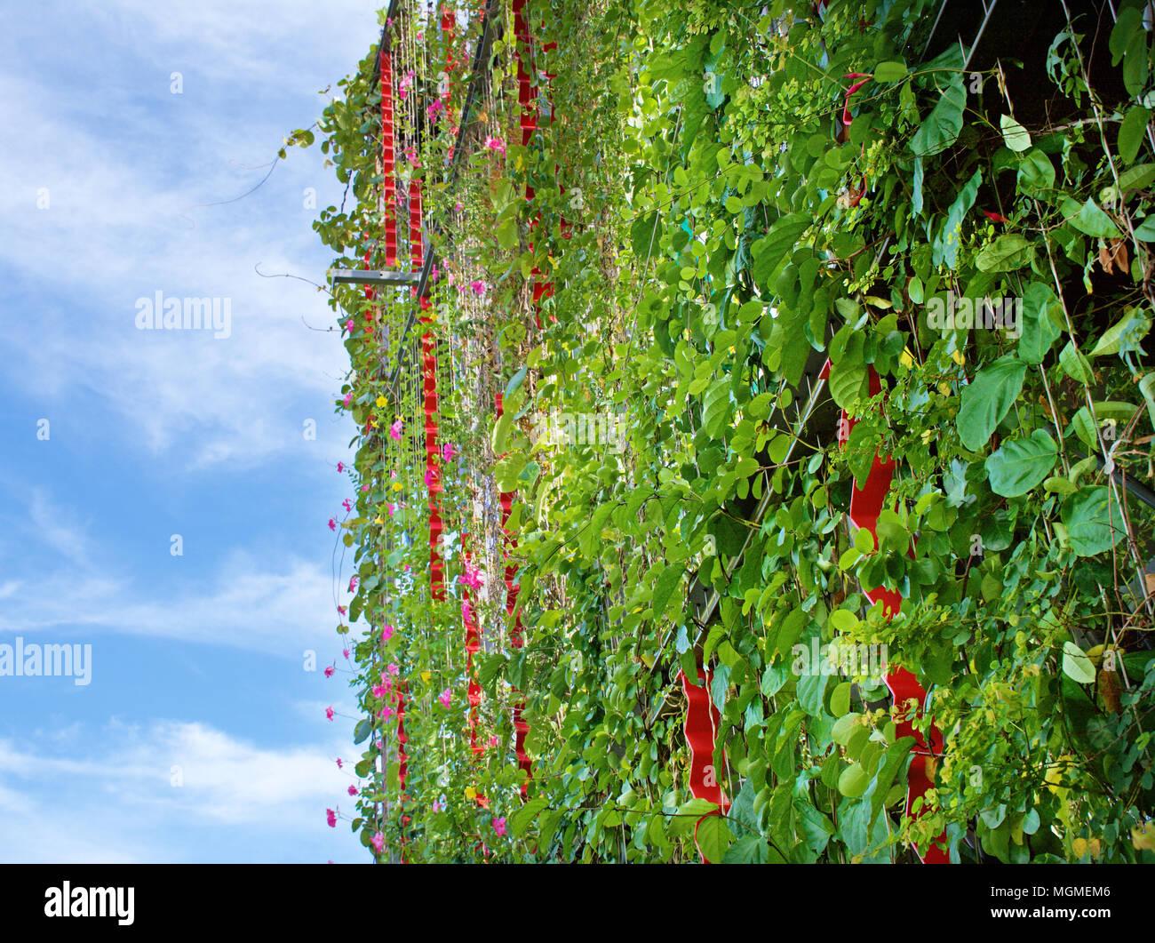 jardin vertical casero c mo hacer jardines verticales paso a materiales ideas y 600338 amazing jardn vertical con enredaderas sobre los alambres en el exterior de  la estructura de un edificio with estructura jardin vertical