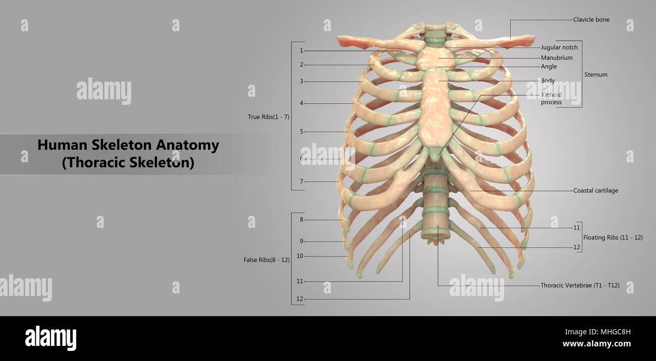 Anterior View Imágenes De Stock & Anterior View Fotos De Stock - Alamy