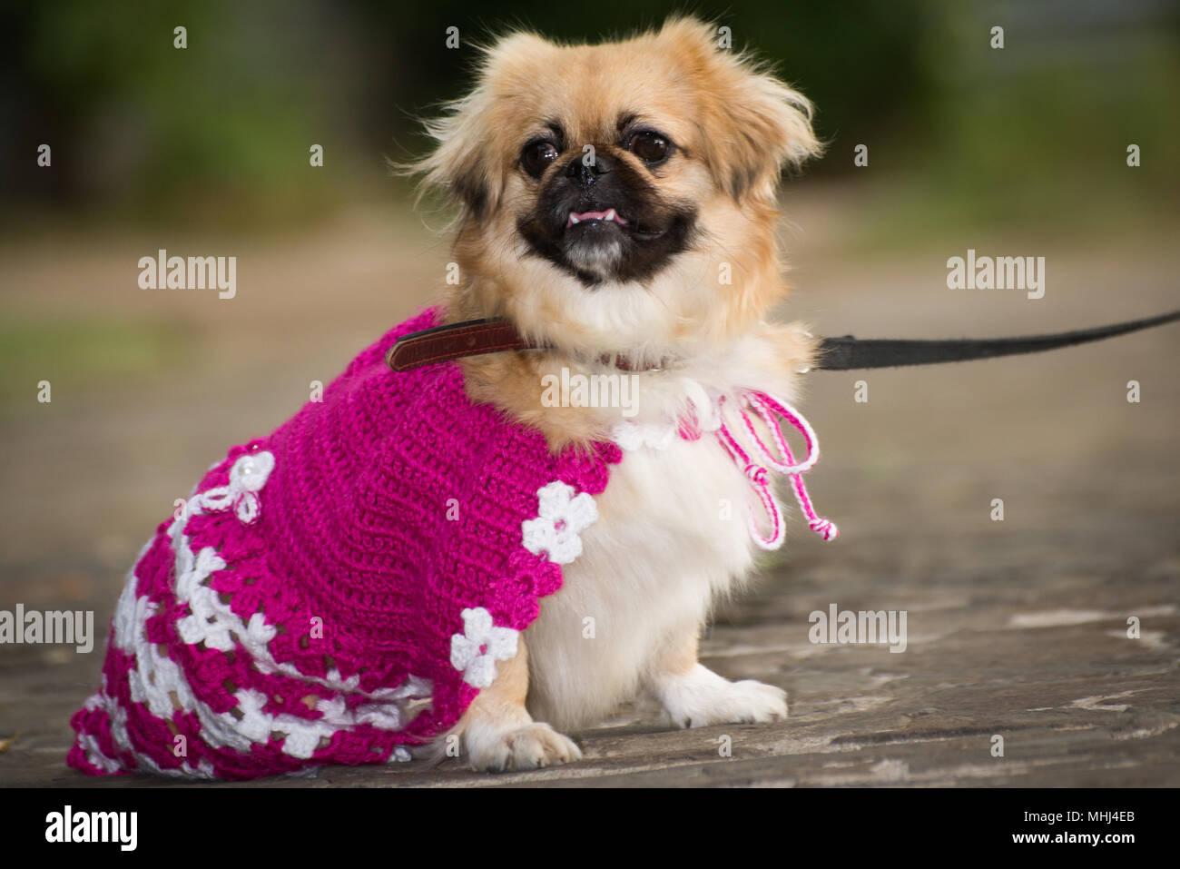 Dog Dressed Up Princess Imágenes De Stock & Dog Dressed Up Princess ...