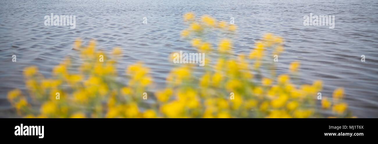 Aguas tranquilas y flores amarillas borrosa primavera encabezado Foto de stock
