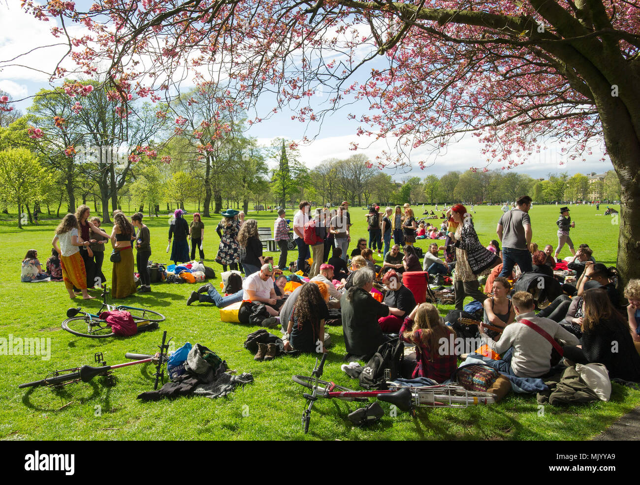Un grupo de personas que se reúnen bajo un árbol de cerezo en flor en los prados durante el fin de semana del puente de mayo. Imagen De Stock