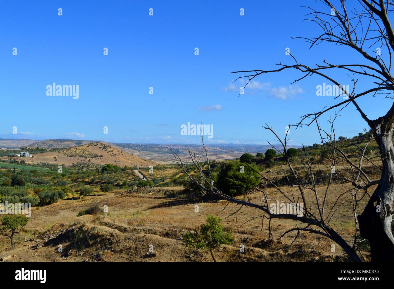 Paisaje siciliano con extensiones de olivos, Italia, Europa Foto de stock
