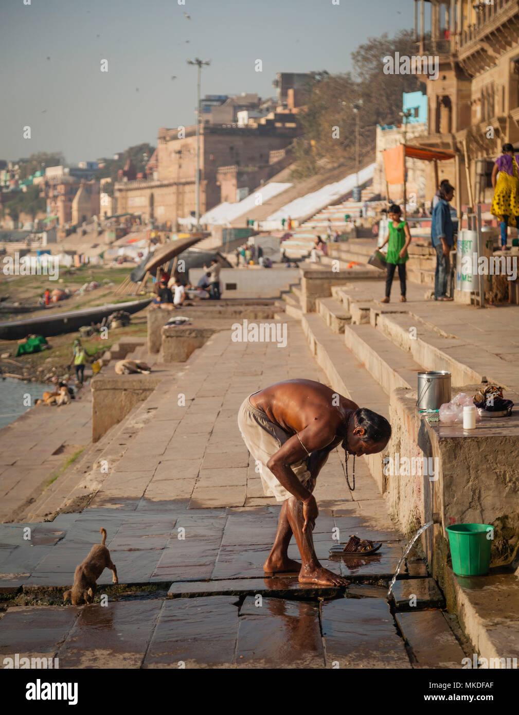 Uno de los cientos de perros y cachorros de bebidas desde el drenaje mientras un caballero lavados de las alcantarillas a lo largo de los Ghats de Varanasi.Varanasi Foto de stock