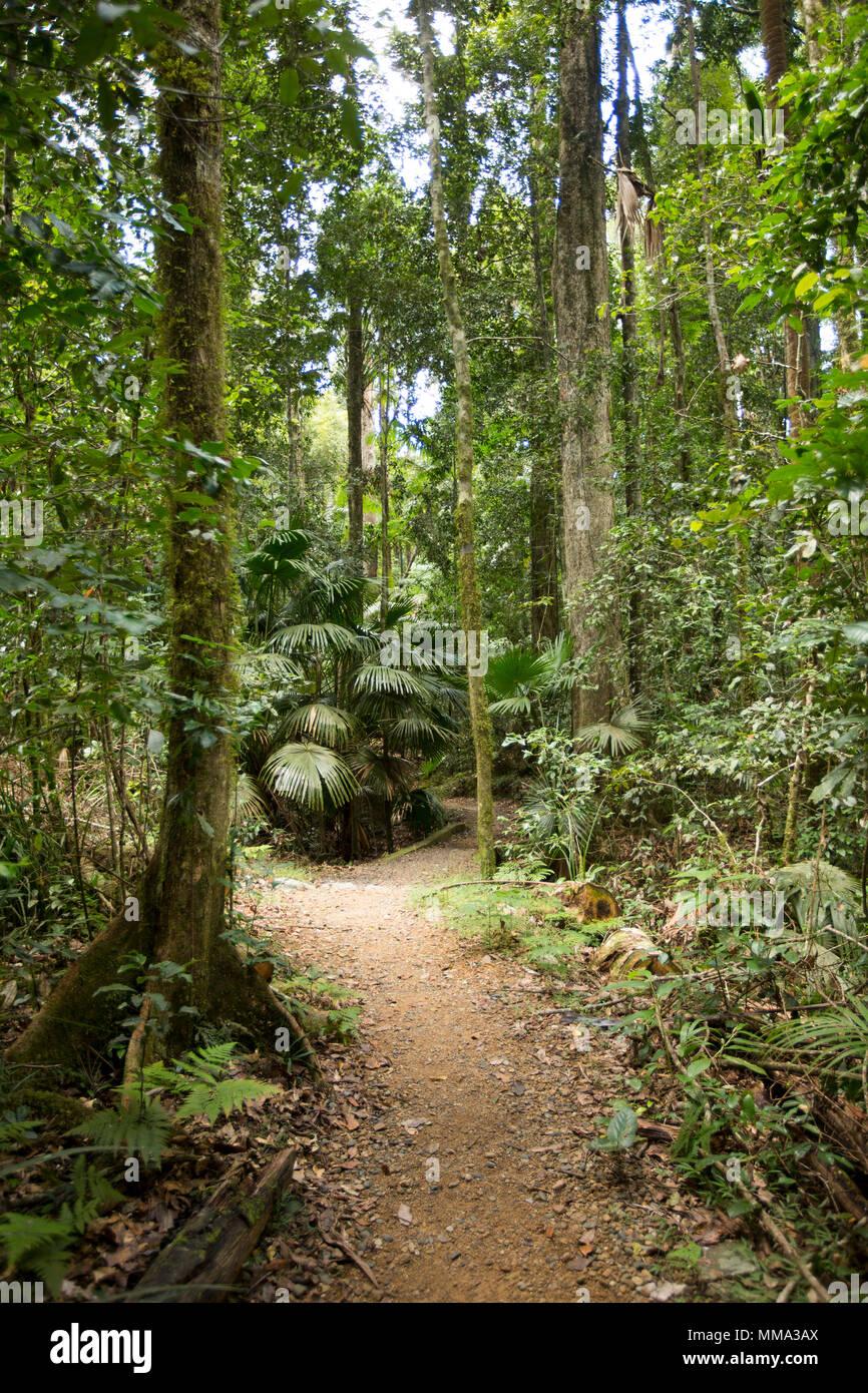 Una pista de caminata a través de la densa vegetación verde esmeralda de la selva tropical en el Parque Nacional Eungalla Queensland Australia Imagen De Stock
