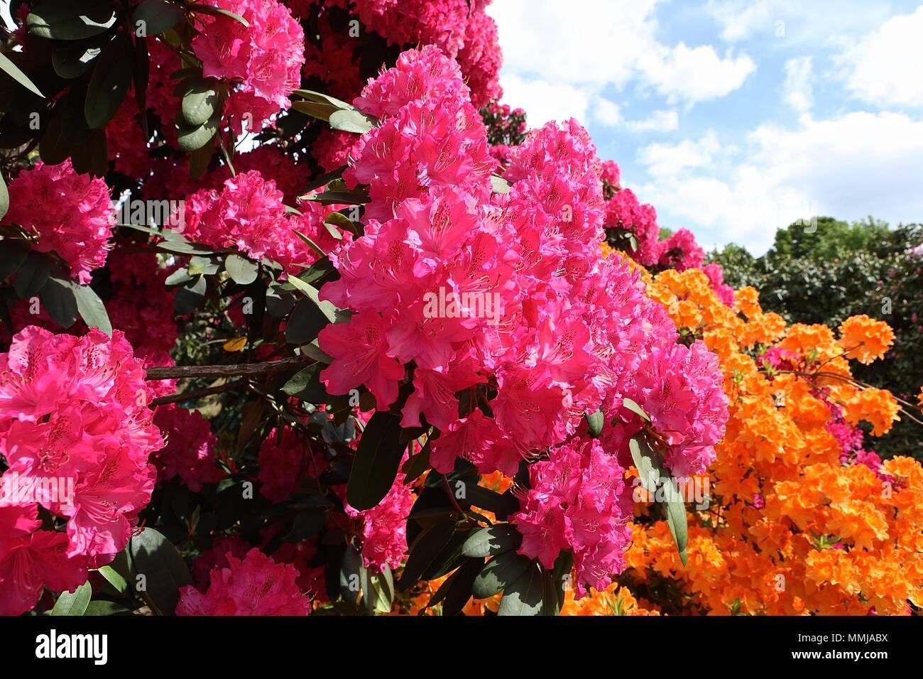 Hampstead Heath jardín de flores de Mayo 2018 Foto de stock