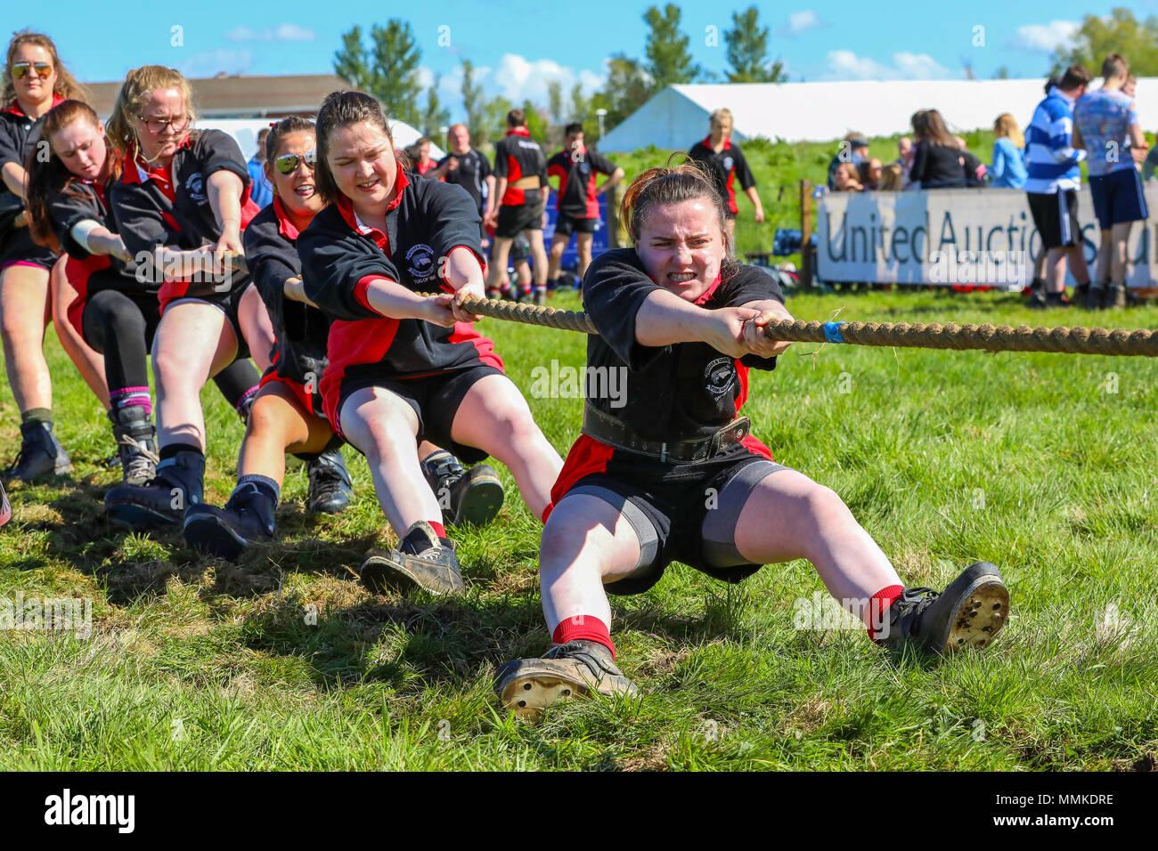 """Ayrshire, Reino Unido. 12 de mayo de 2018. En un caluroso y soleado día de mayo, la tasa anual del condado de Ayr Show celebrado en el Hipódromo de Ayr atrajo a cientos de participantes en los concursos agrícolas y también a miles de espectadores. Así como las tradicionales competiciones de bovinos, ovinos y aves de corral, hay premios para los ganadores de los hombres y mujeres jóvenes agricultores """"Tug of War"""" de la competencia y para el mejor decorado camión Crédito: Findlay/Alamy Live News Imagen De Stock"""
