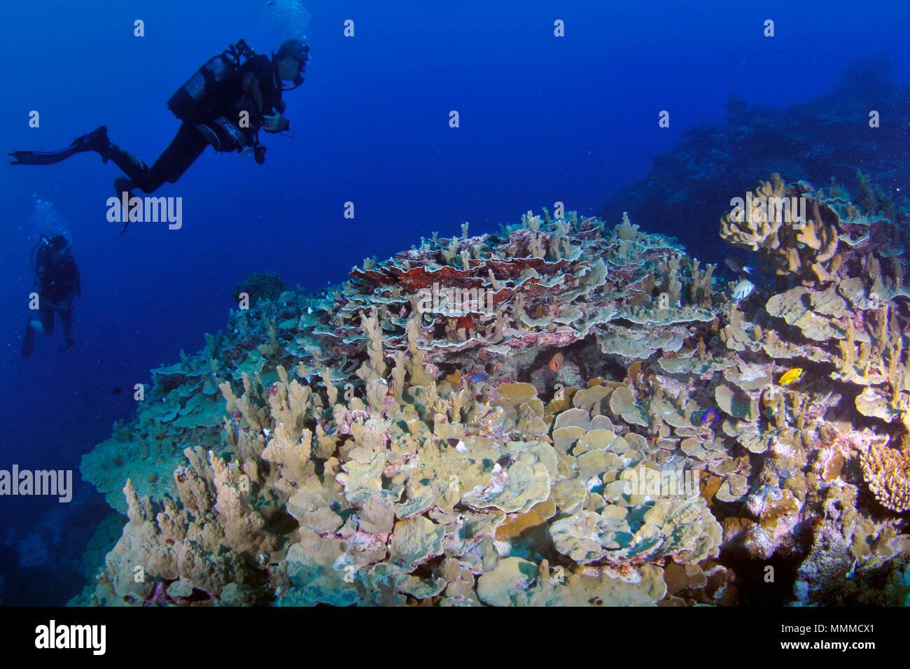 Los buceadores exploran prístina un arrecife de coral en la isla de Wallis, Wallis y Futuna, Pacífico Sur Foto de stock