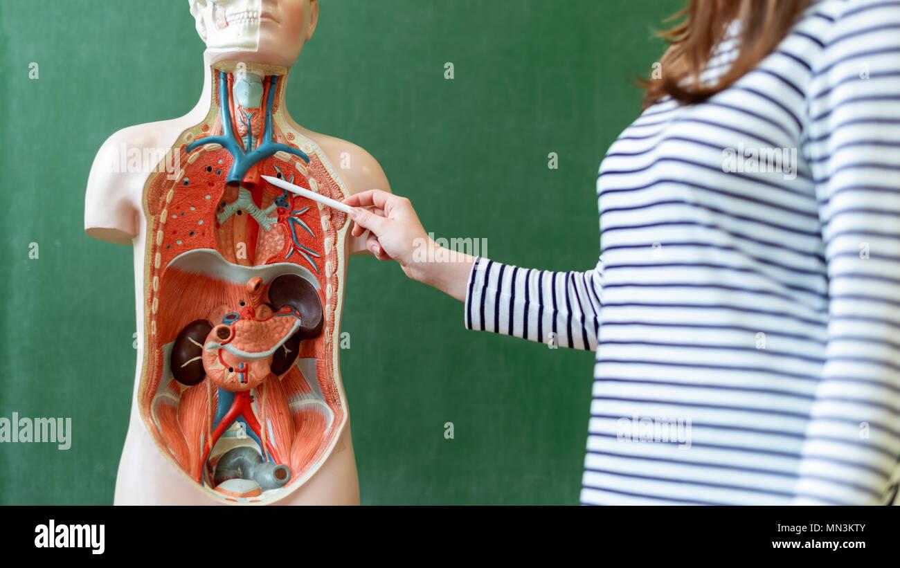 Anatomy Class Imágenes De Stock & Anatomy Class Fotos De Stock - Alamy