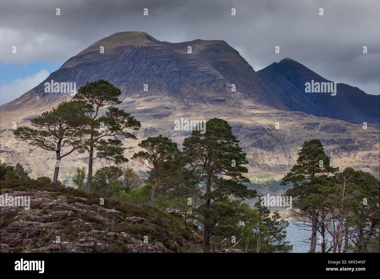 Caledonian pinos sobre loch Torridon, Ben Damh Estate, Wester Ross (Escocia, Reino Unido) Imagen De Stock