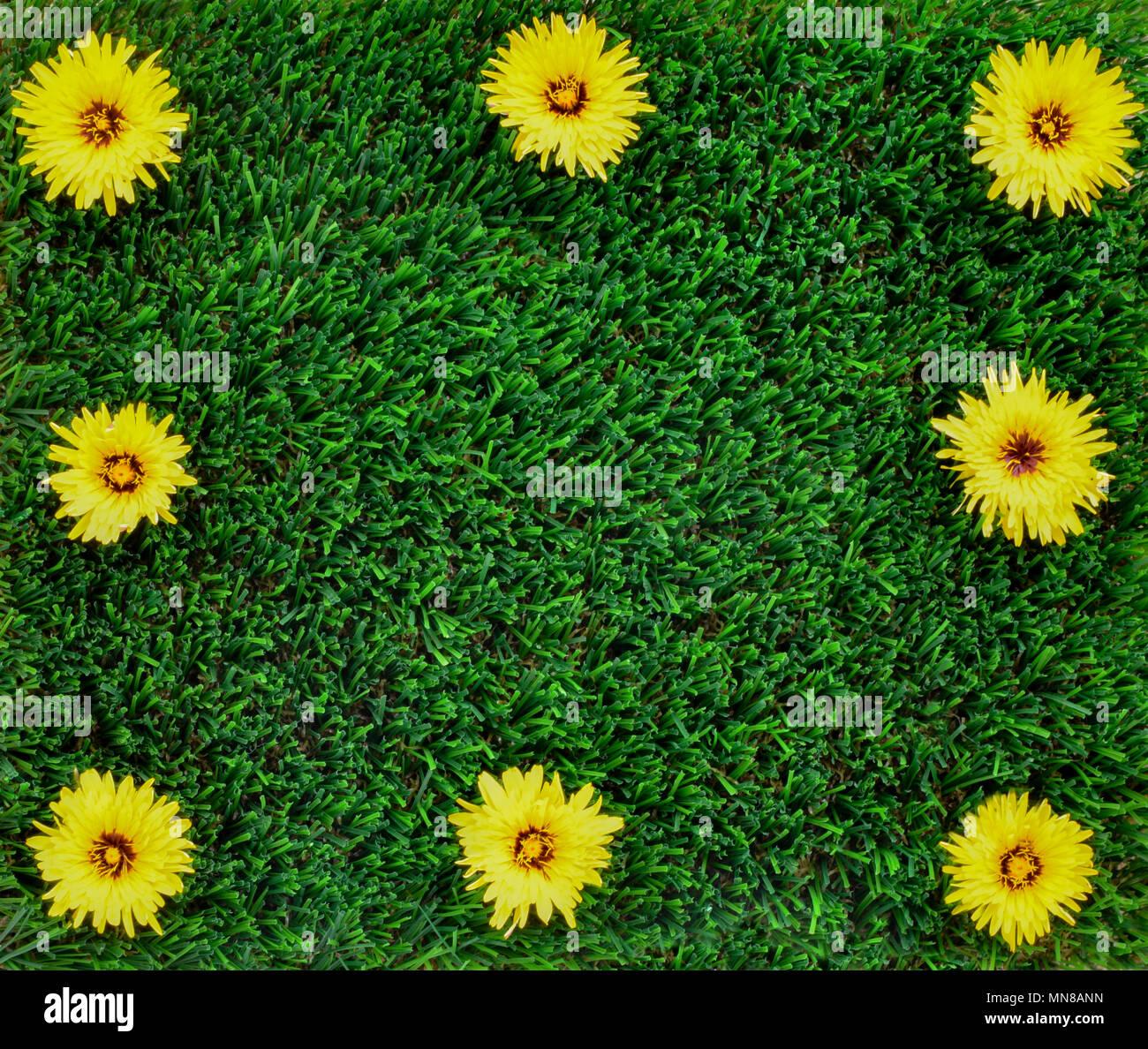 Copie El Espacio Para El Concepto De Fondo Sin Maleza En El Jardin - Flores-bonitas-para-jardin