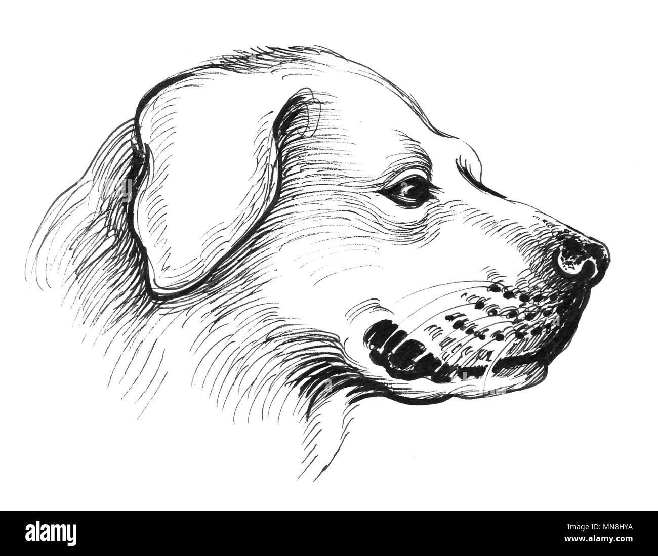 Cabeza De Perro Dibujo En Blanco Y Negro De Tinta Foto
