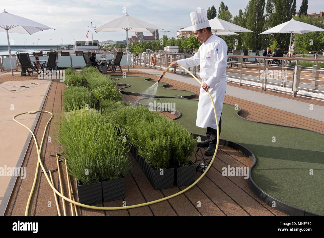 Un crucero chef aguas su jardín de hierbas en la cubierta superior, mientras está acoplado en el Danubio en Viena, Austria. Imagen De Stock