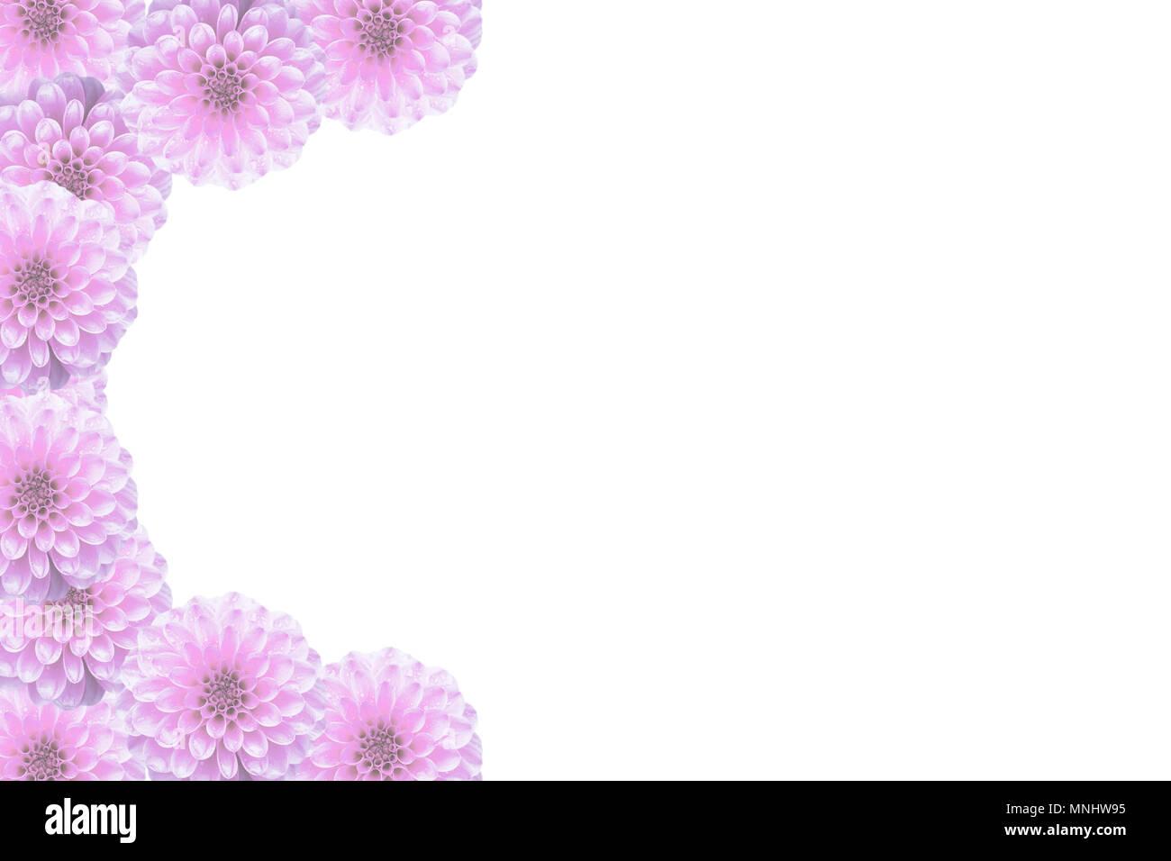 Postal floral con flores rosas Dahlia, collage. Marco floral Pompon ...