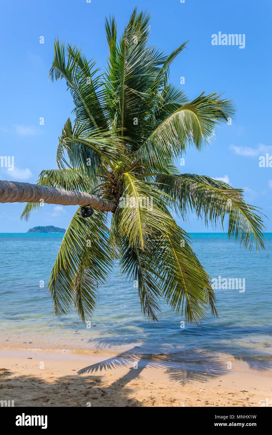 Palm Tree en la hermosa playa tropical en la isla de Koh Kood, en Tailandia Foto de stock