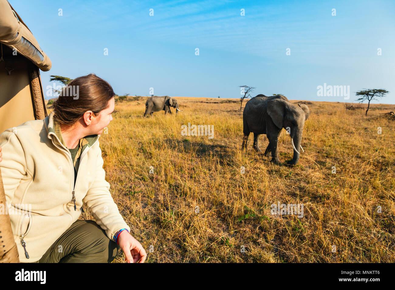 Mujer en safari juego paseo disfrutando de encuentro cercano con los elefantes en Kenia África Foto de stock