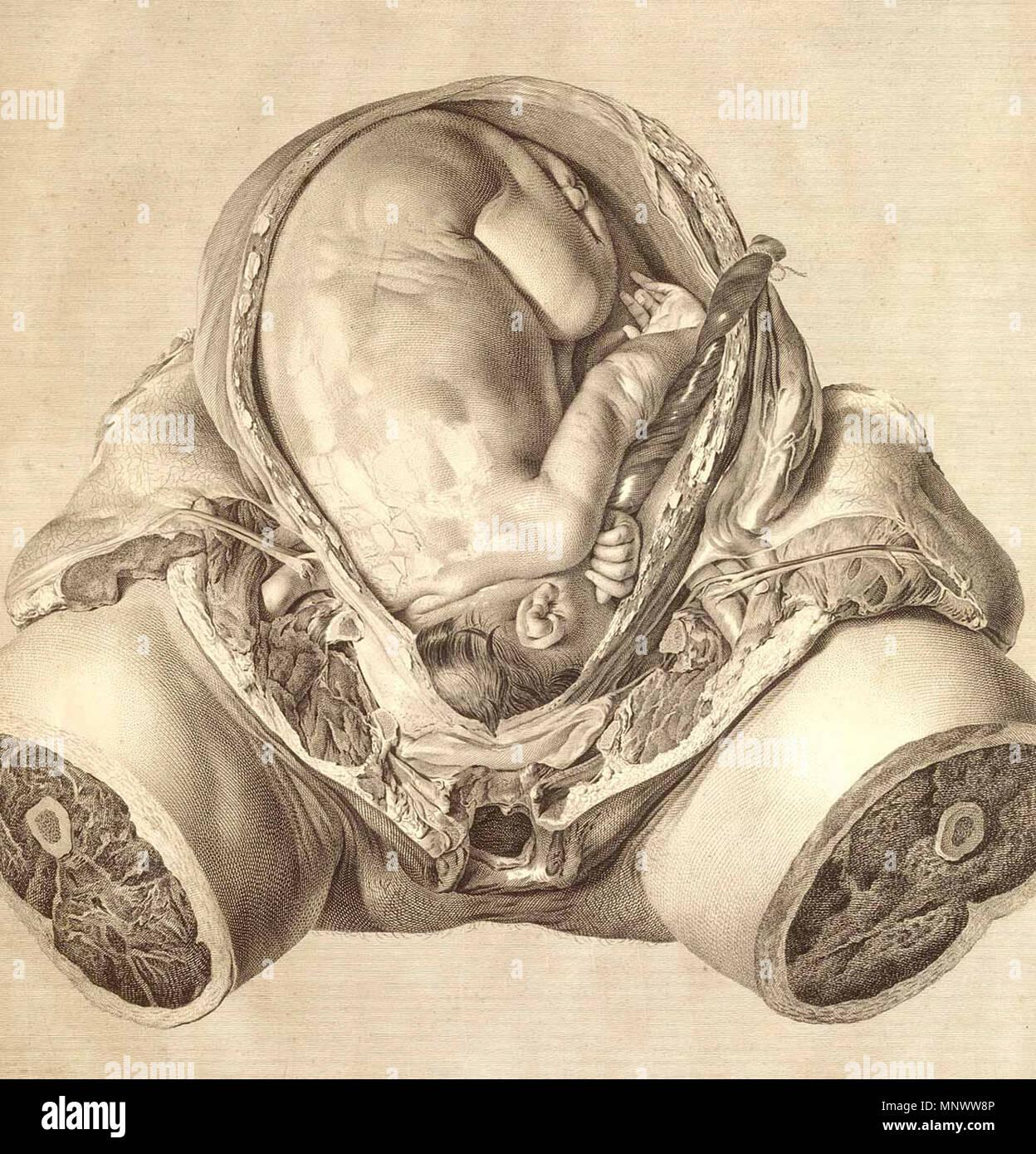 Asombroso Anatomía Aplicada De útero Adorno - Anatomía de Las ...