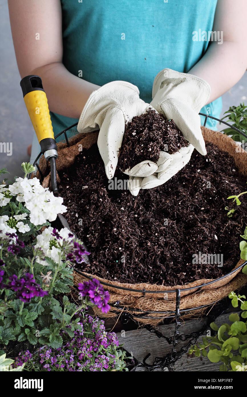 Demostración de una joven dando un tutorial sobre cómo plantar un colgaderas o en maceta de flores. Las flores incluyen la verbena, Petunias, sigilosas Jenn Foto de stock
