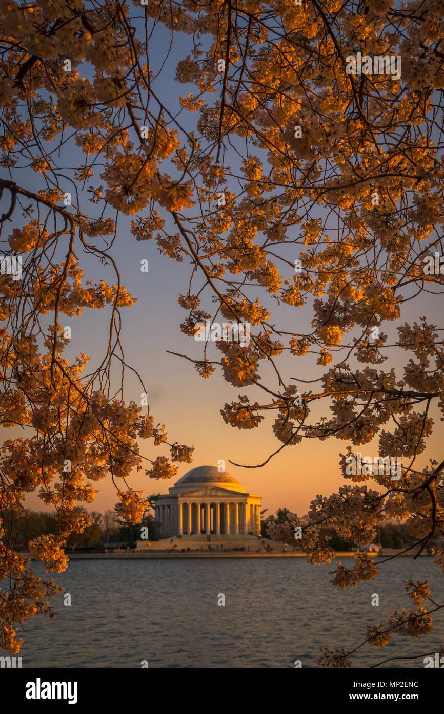 Washington, DC, Festival de la flor de la Cereza Imagen De Stock
