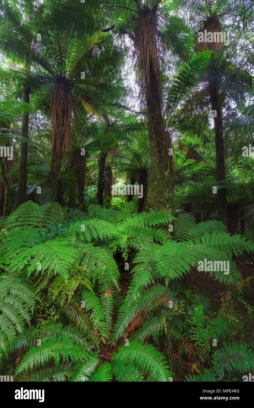 Nueva Zelandia rainforest detalles de imagen horizontal Imagen De Stock