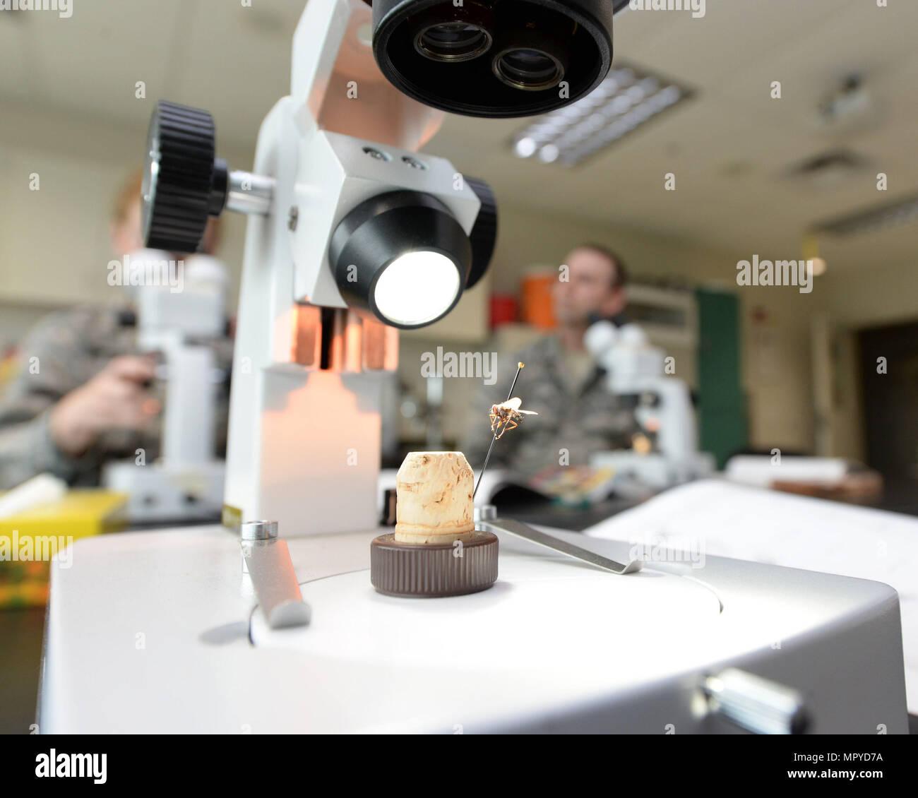 Un microscopio dentro del laboratorio de entomología en la 88 estaciones un escuadrón de Medicina Aeroespacial mosca médicamente significativa de la familia Diptera en la base de la fuerza aérea de Wright-Patterson, Ohio, 21 de abril de 2017. La 88ª AMDS estudian los vectores mecánicos de insectos de importancia militar y las principales enfermedades que transmiten. (Ee.Uu. Foto de la fuerza aérea por Michelle Gigante/liberado) Imagen De Stock