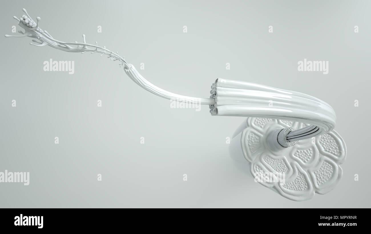 Sección transversal del músculo en vista cercana con alto grado de detalle - 3D Rendering Imagen De Stock