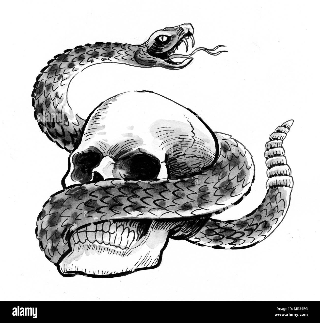Cráneo Humano Y Sonajero De Serpiente Dibujo En Blanco Y Negro De
