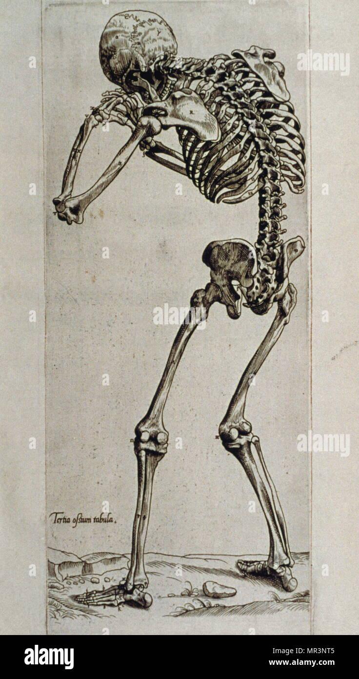 Excepcional La Anatomía Del Motivo Viñeta - Imágenes de Anatomía ...