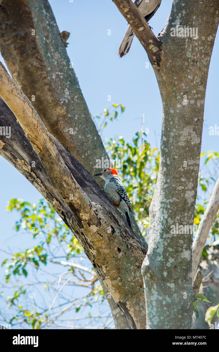 Aves Imagen De Stock