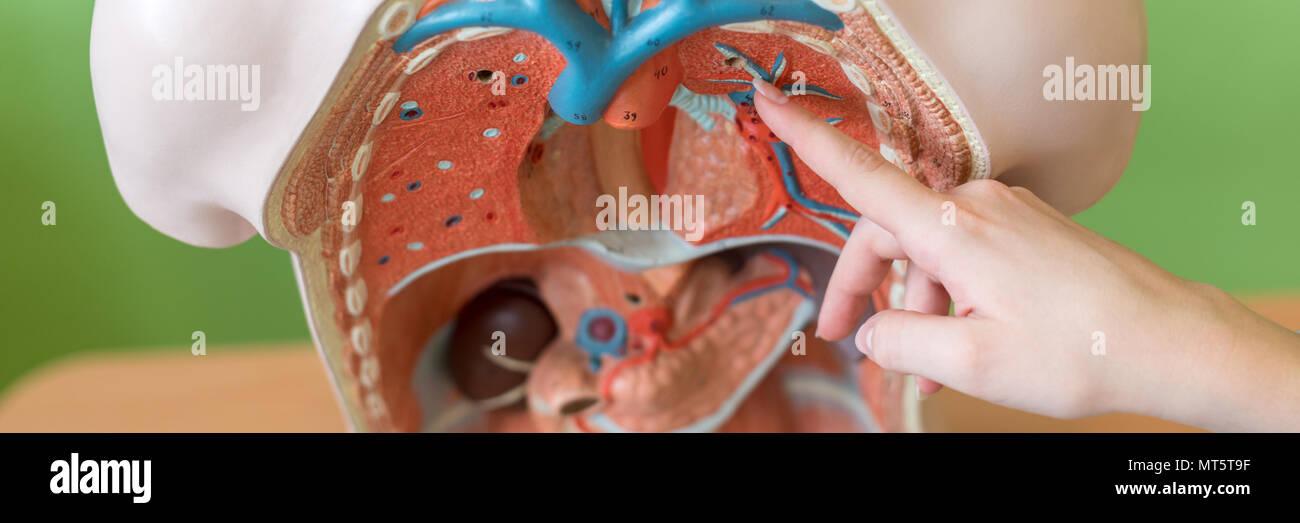 Encantador Dentro De Diagrama De Cuerpo Hembra Ideas - Anatomía de ...