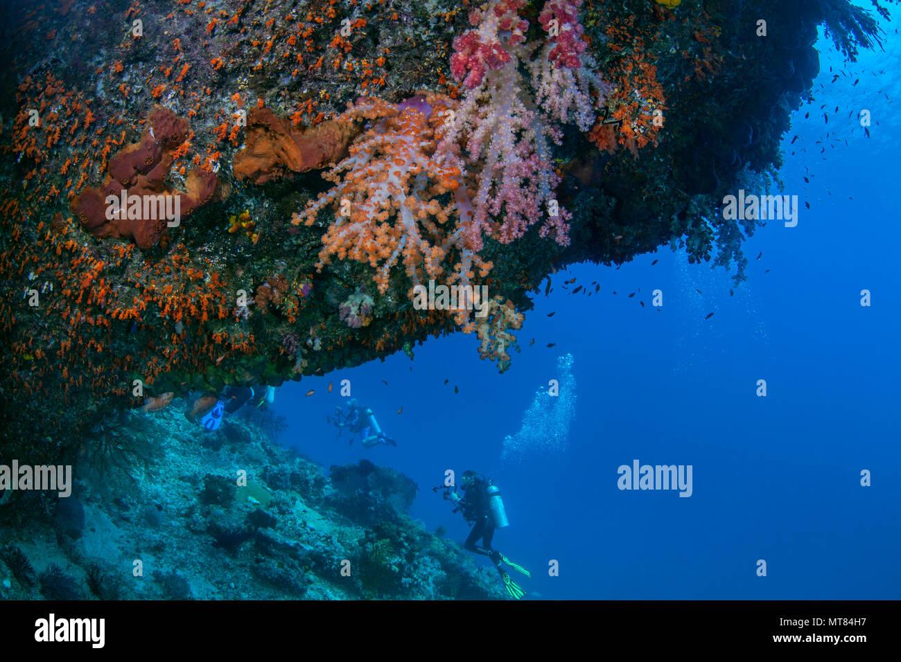 Los submarinistas exploran pared de coral con corales blandos en cornisa en primer plano. Raja Ampat, Indonesia. Foto de stock