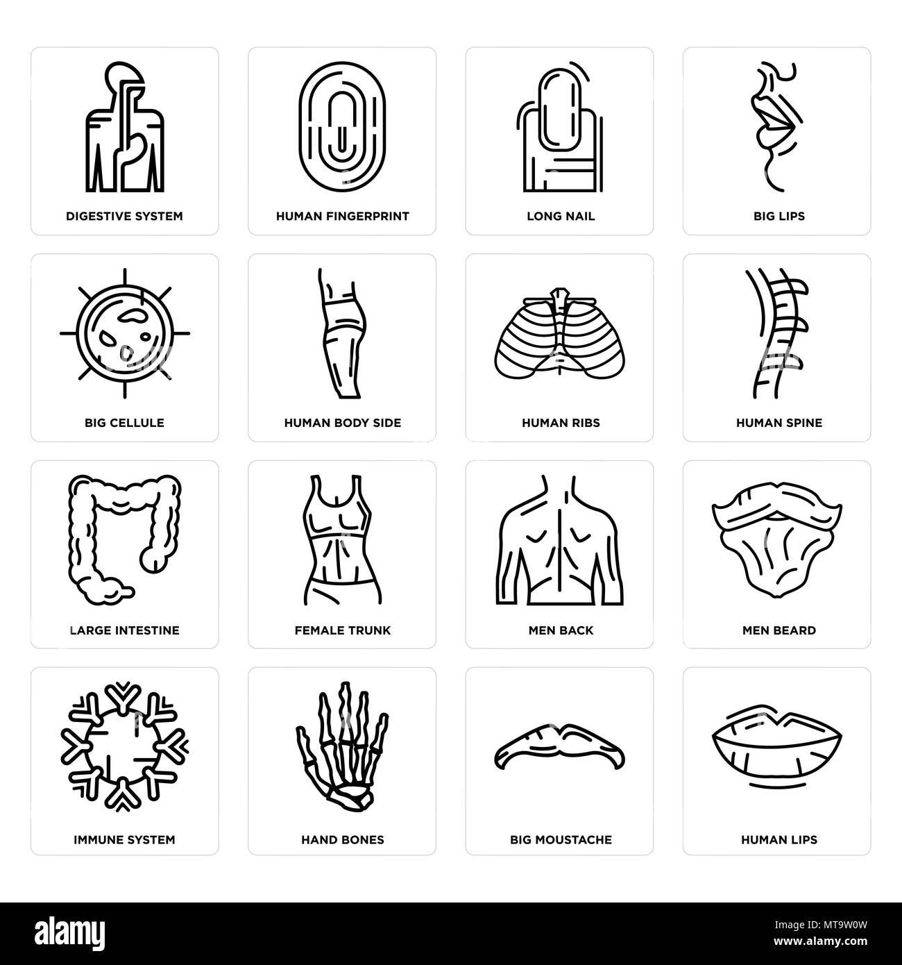 Conjunto de 16 sencillos iconos editables como labios humanos, gran ...