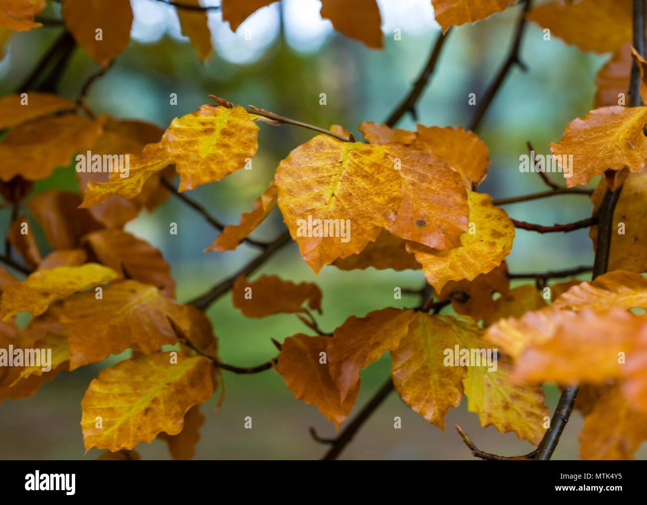 Golpear las maderas para los picos de color en el otoño es uno de mis pasatiempos favoritos Foto de stock