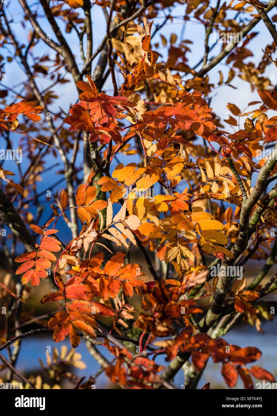 Los colores de otoño estaban en su máxima perfección cuando vinimos de nuestra visita Foto de stock