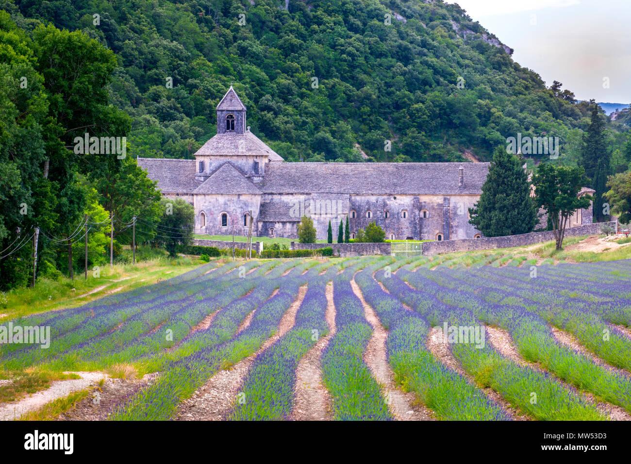 Francia, la región de Provenza, Gordes, Ciudad Senanque Abbey, campos de lavanda Imagen De Stock