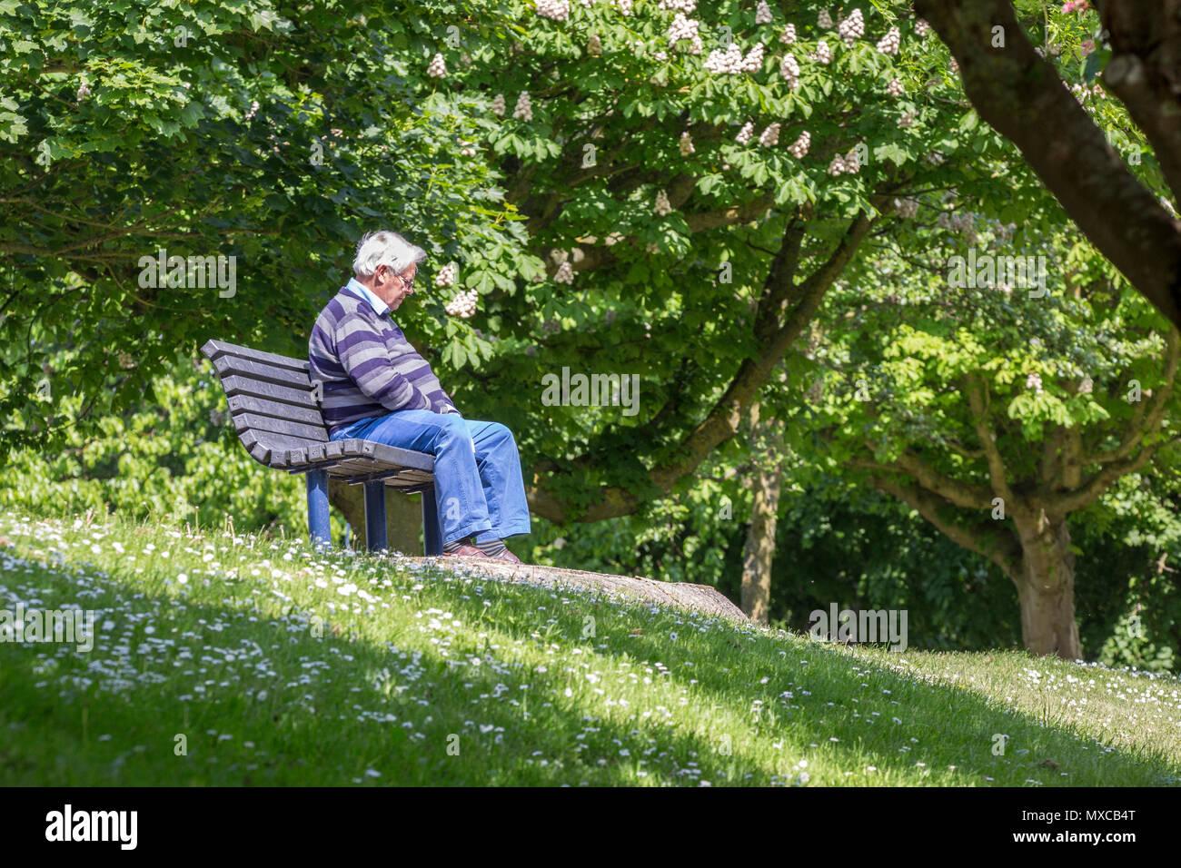 Un hombre sentado solo en un banco de bosques Imagen De Stock