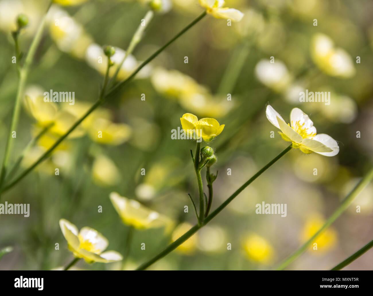 Las Flores Amarillas Silvestres Fondo De Verano Foto Imagen De