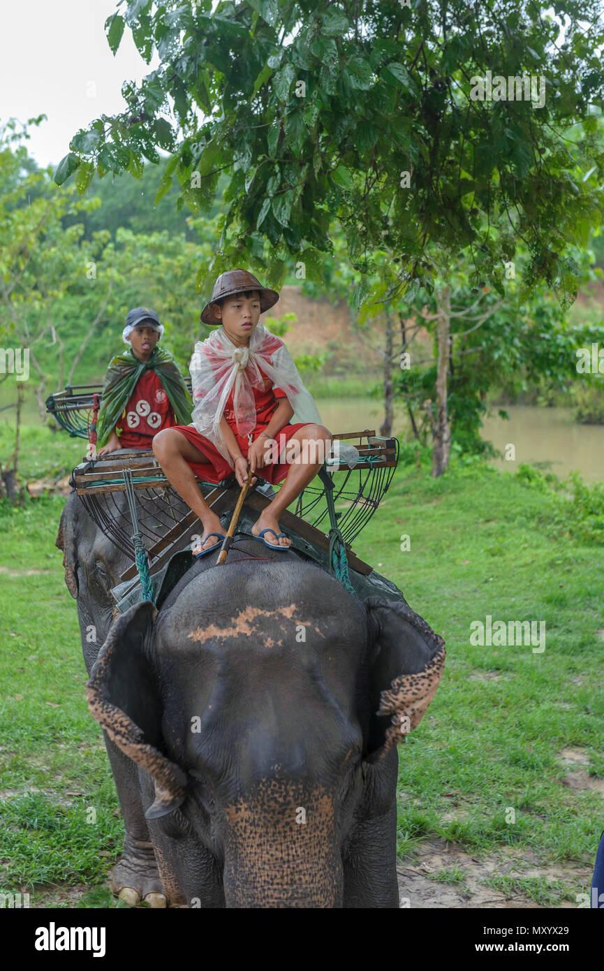 Santuario de elefantes, de la provincia de Kanchanaburi, Tailandia Imagen De Stock