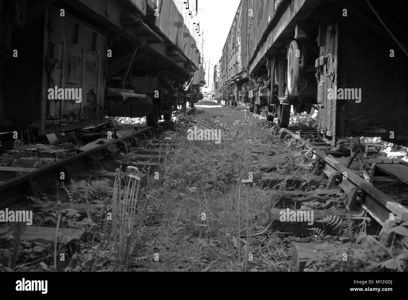 Transport Rail Wagon Imágenes De Stock & Transport Rail Wagon Fotos ...