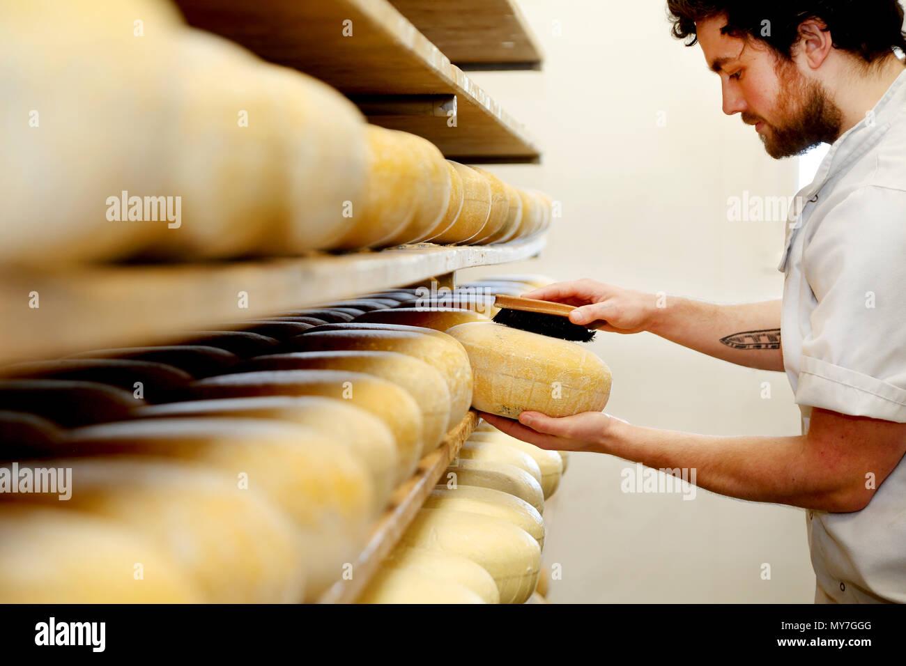 El quesero artesano cepillado fuera del molde quesos duros a mano Imagen De Stock