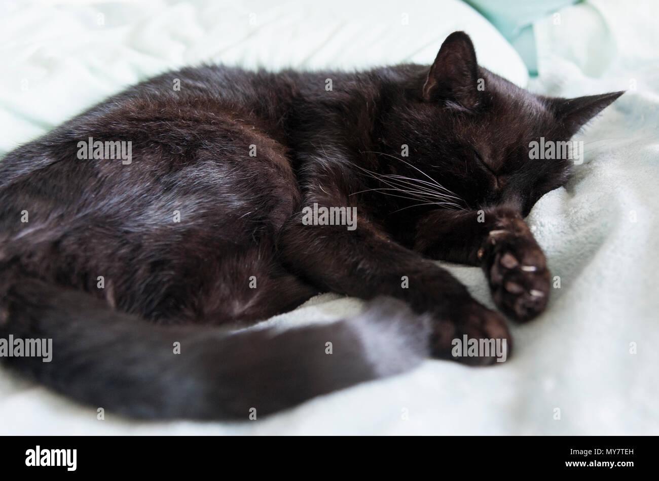 Rescate Viejo gato durmiendo en la comodidad. Imagen De Stock