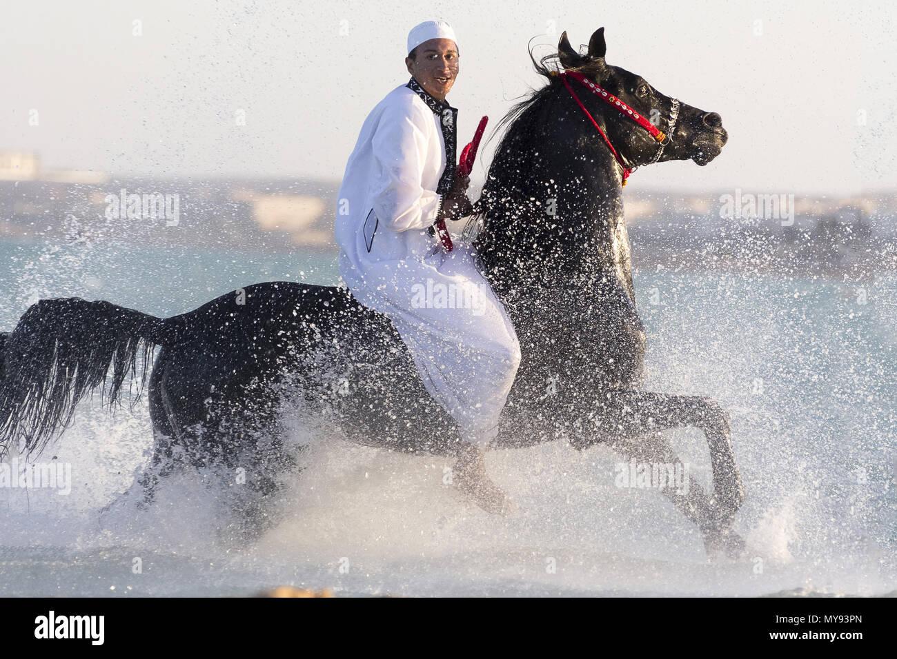 Arabian Horse. Sobre negro semental jinete galopando en aguas poco profundas. Egipto Foto de stock