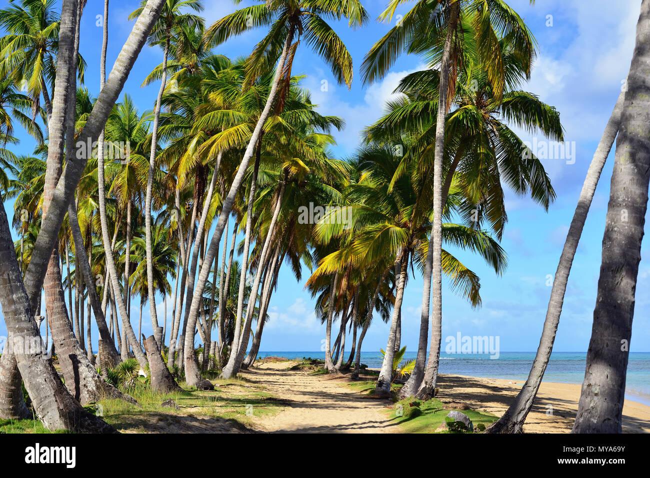 Playa bonita playa en la península de Samaná en República Dominicana, cerca de la ciudad de Las Terrenas Imagen De Stock
