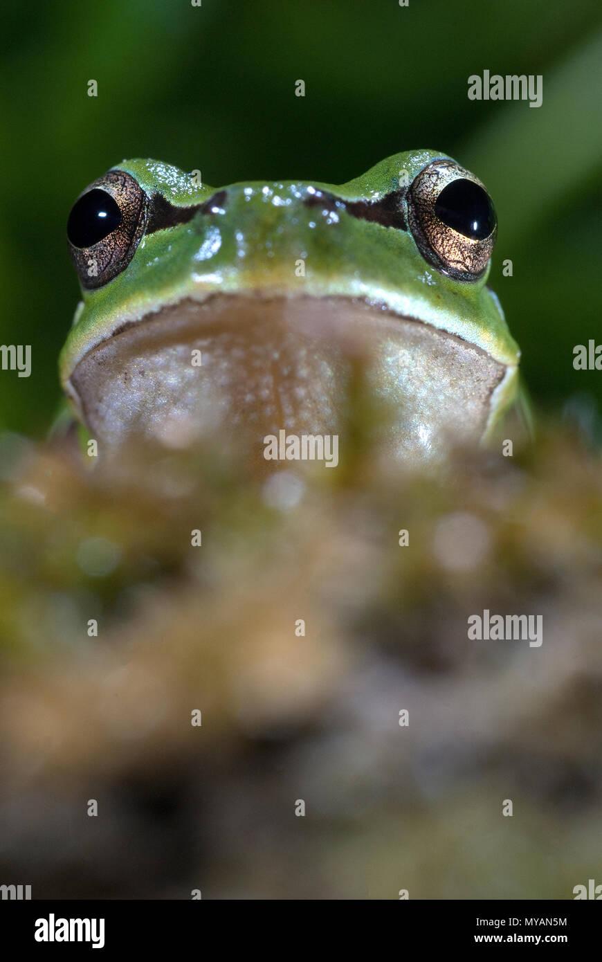 Green Little Eyes Imágenes De Stock & Green Little Eyes Fotos De ...