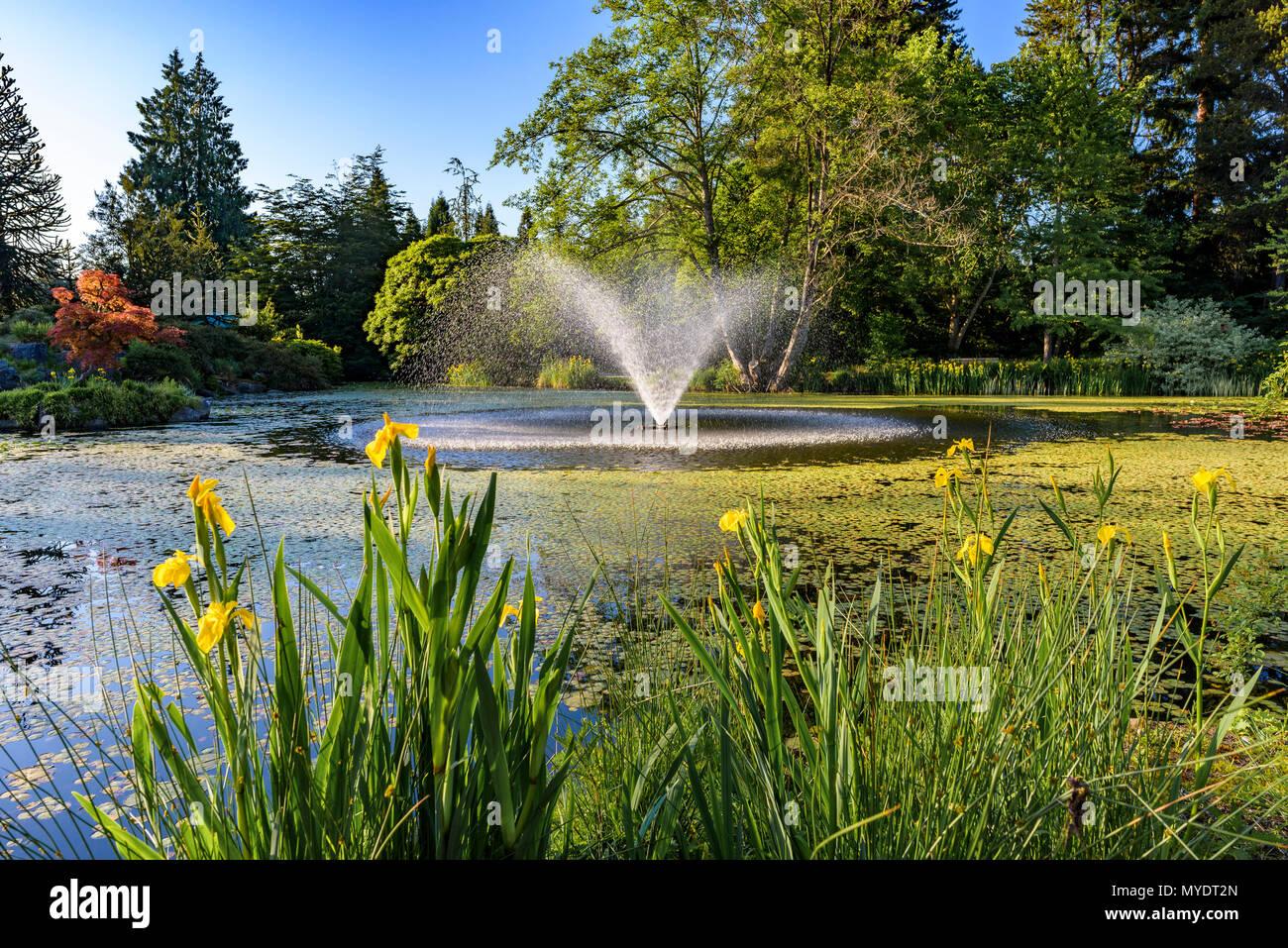 Estanque con fuente, Jardín Botánico VanDusen, Vancouver, British Columbia, Canadá. Foto de stock