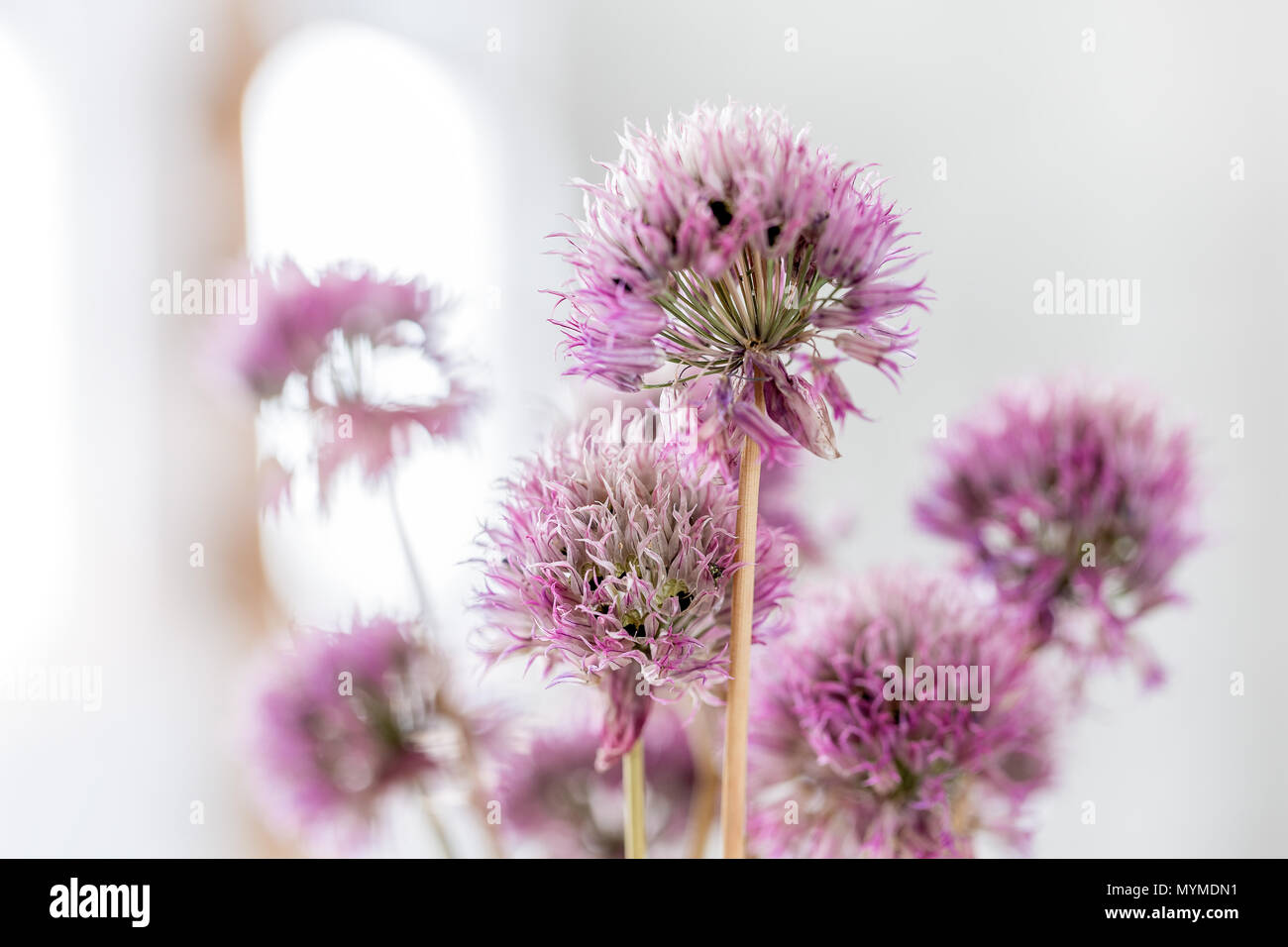 Flores unisexual flower