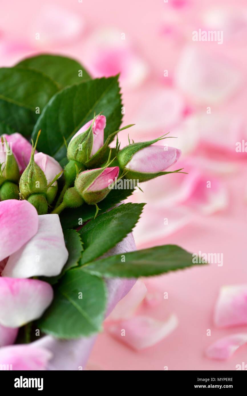 Pétalos de rosa rosa clavel rodada en un formato vertical de enfoque ...